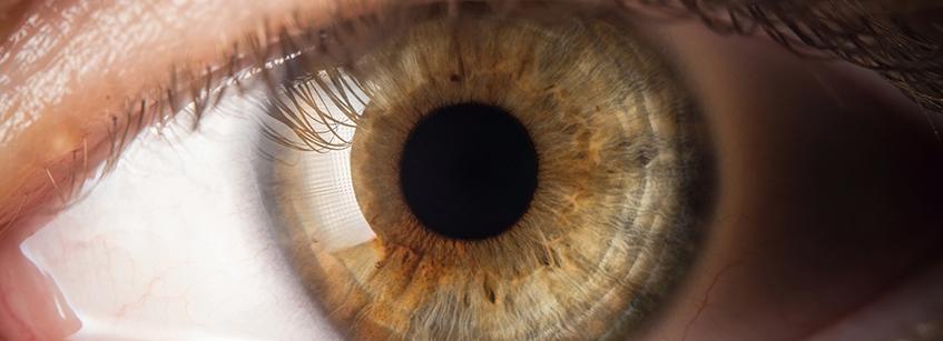 ojos, curiosidades, mirada